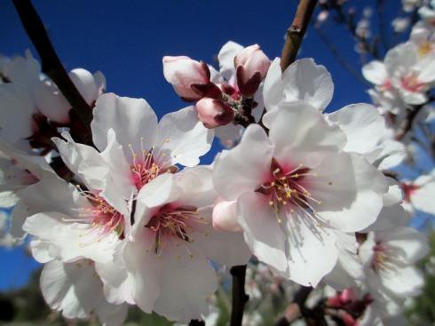flor de almendro10_casa rural shariqua