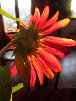 flor de otoño_casa rural shariqua