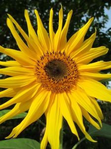 flores1_casa rural shariqua