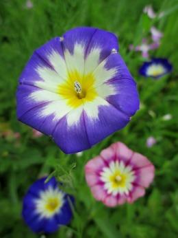 flores_casa rural shariqua