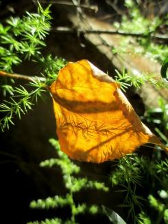 herbs13_casa rural shariqua