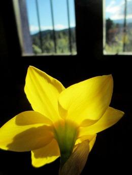 primavera_casa rural shariqua