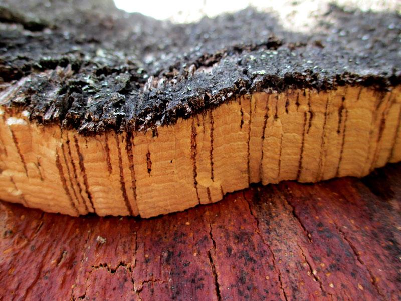 El paquidermo vegetal shar qua en off - Propiedades del corcho ...