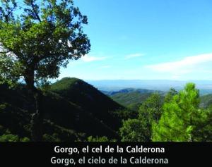 cartel calderona gorgo