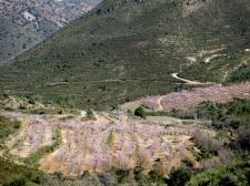 pina de montalgrao10_casa rural shariqua