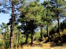 pina de montalgrao12_casa rural shariqua