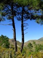pina de montalgrao2_casa rural shariqua