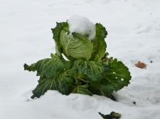 nieve-alto-palancia12_casa-rural-shariqua