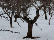 nieve-alto-palancia15_casa-rural-shariqua