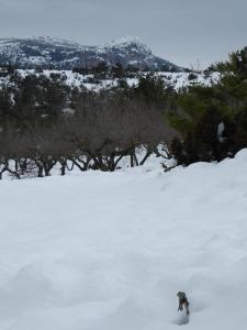 nieve-alto-palancia3_casa-rural-shariqua